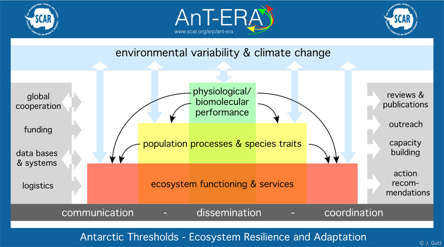 AnTERA cartoon structure web
