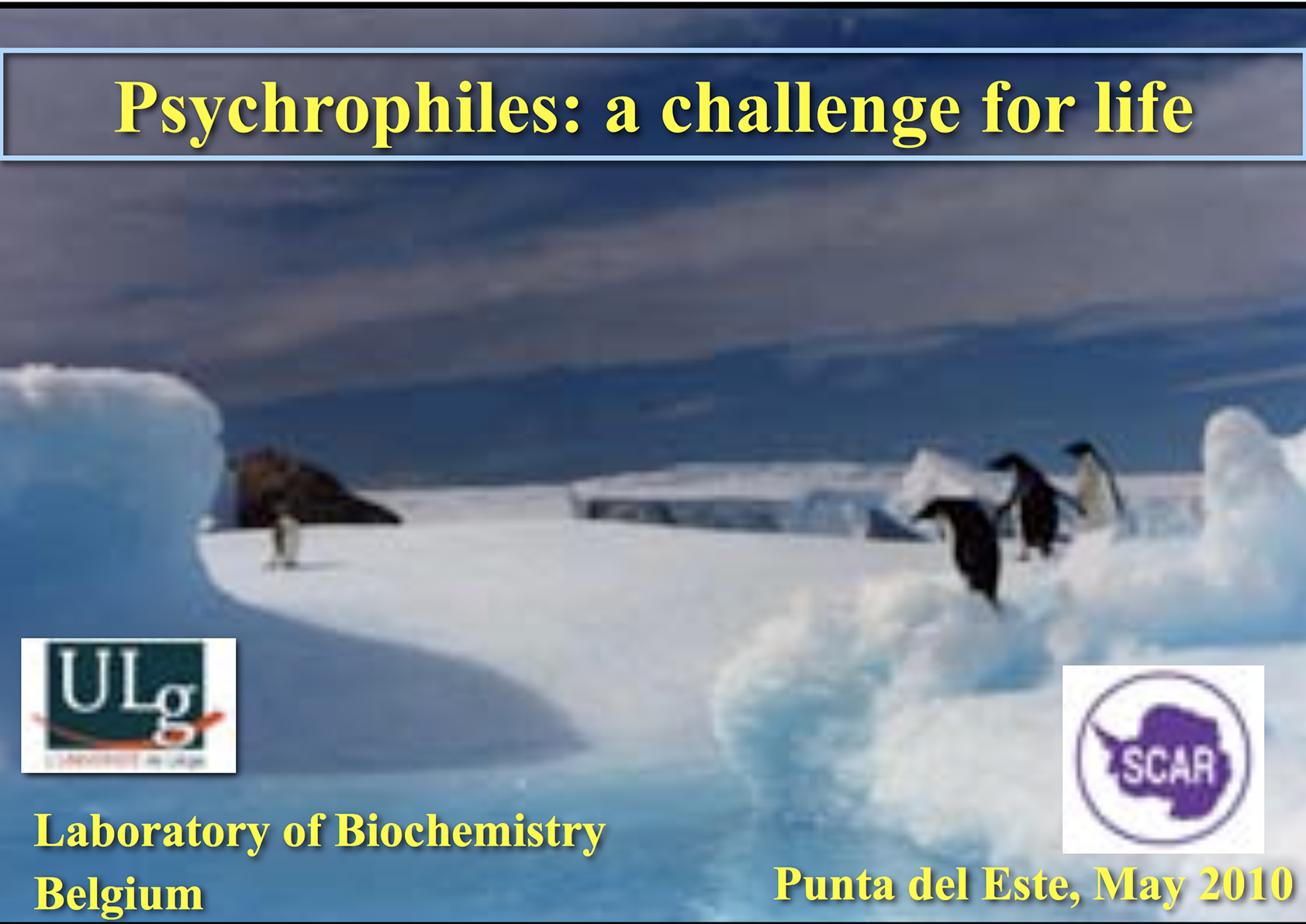 SCAR Lecture 2010: Psychrophiles: A Challenge for Life
